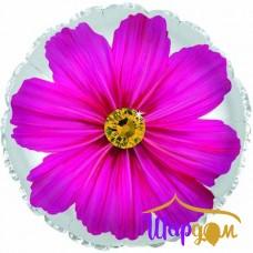 Гелиевый фольгированный круг гербера розовая